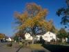 Ossendorfer Herbstimpressionen 10.2017- (12)
