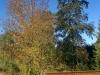 Ossendorfer Herbstimpressionen 10.2017- (56)