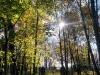 Ossendorfer Herbstimpressionen 10.2017- (90)