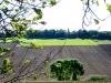 judenfriedhof_heinturm_gr