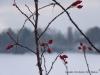 2010-01-02-winter-am-heinberg-1
