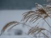 2010-01-02-winter-am-heinberg-5